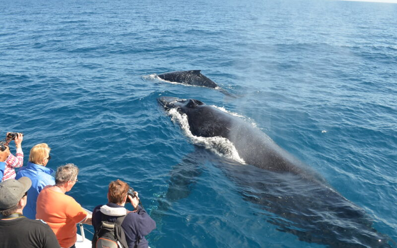 The Best Locations to Go Whale Watching